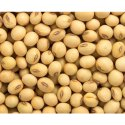 Yellow Healthy Soybean