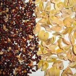 Amla Seeds, Packaging Size: 1-10 Kg