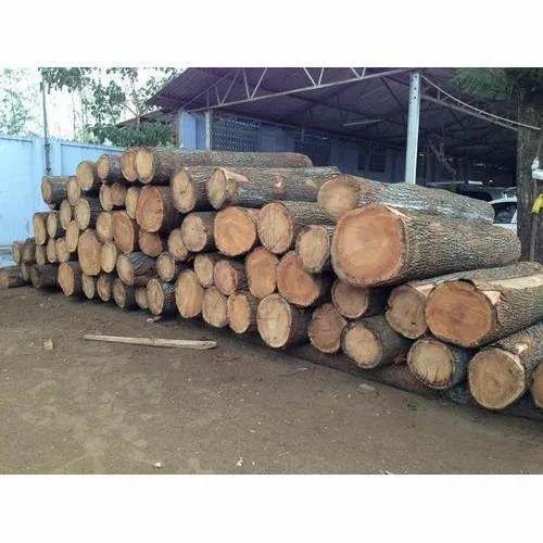 Brown Mango Wood Log For Furniture Rs