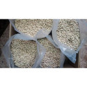 Ben Oil Seeds Kernel for Moringa Oil Extraction
