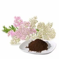Yarrow Flowers Extract