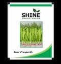 Shine Brand Seeds Hybrid Chilli - F1 Shine 820, Pack Size: 1kg
