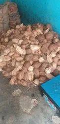 A Grade Semi Husked Coconut, Karnataka, Coconut Size Available: Large