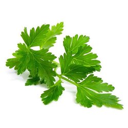 Parsley Leaf Extract, Packaging Type: Hdpe Drum, Packaging Size: 10 To 25 Kg