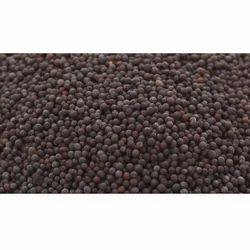 Mustard Seeds, 25 & 50 Kg