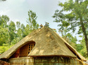 Roofing Thatches