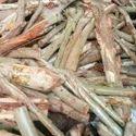 Wet Eucalyptus Firewood