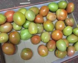 Export Quality Tomato
