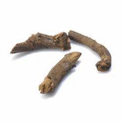 Chitraka Mula / Plumbago Zeylanica/ Anacyclus pyrethrum DC.