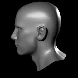 Model Of The Head