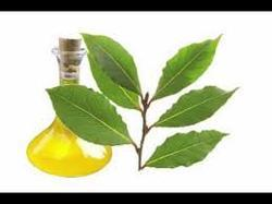 Bay Leaf Oil OA
