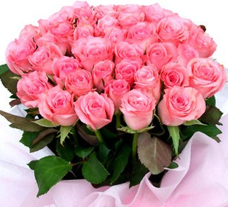 Bunch of pink roses 25 pcs fresh flowers plants trees any gift bunch of pink roses 25 pcs mightylinksfo