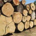 Upto 16 Feet Felix Ghana Teak Timber, Teak Wood