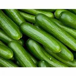 A Grade Green Fresh Cucumber