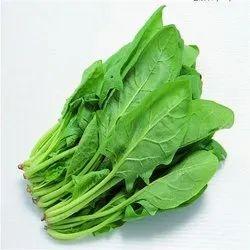 A Grade Green Fresh Spinach Leaves, Gunny Bag