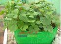 HDPE Grow Bags