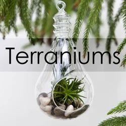 Terrariums Wholesale Price Mandi Rate For Glass Terrarium