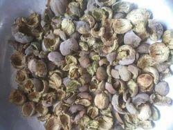 Dry Baheda Chilka - Vibhitaki Seedless - Terminalia Bellirica