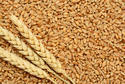 Angel Wheat, India, High In Protein