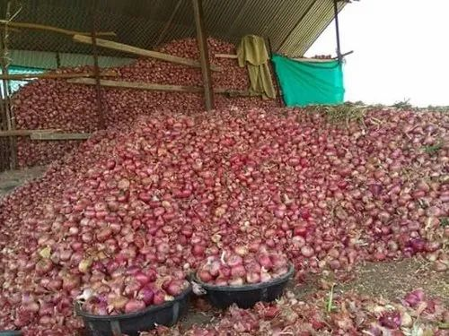 Organic Onion Red Onion Wholesaler From Ahmednagar