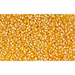 Indian Raw Yellow Maize Seed, Gluten Free, High In Protein, No Artificial Flavour