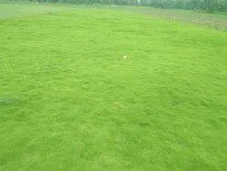 Green natural garden lawn grass carpet