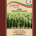 Yamuna Seeds Hybrid Sorghum Sudangrass Seed, For Agriculture, Pack Size: 10 Kg