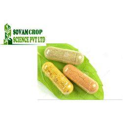 Herbal Giloy Capsules