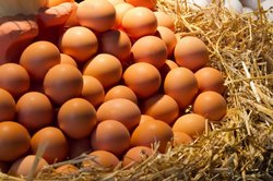Brown Protein Eggs, Packaging Type: Box