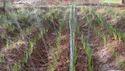 Rain Pipe Irrigation System