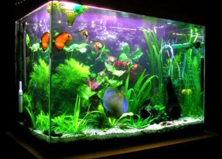 Artificial Garden Aquarium