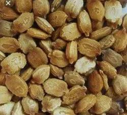 Dried Green Bitter Gourd Seed, For Vegetables, Packaging Size: Plastic Bag