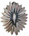 Anchovy Silver Fresh Sea Fish