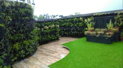 Green Wall For Terrace Garden