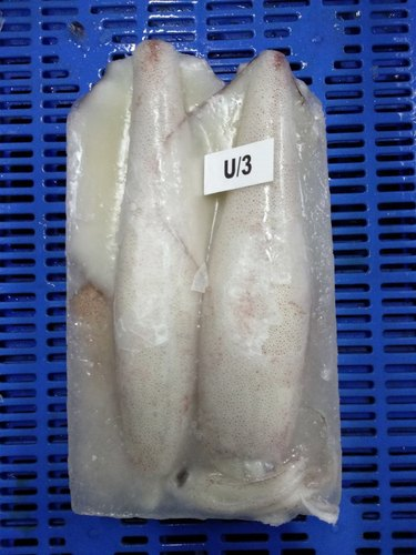 Squid Whole (Loligo Duvauceli)
