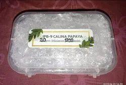 Ipb-9 Calina Papaya Seeds