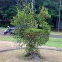 Bird Topiary Plants