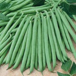 French Bean  Seeds - Falgu