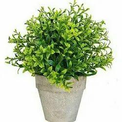 Hyperbole Artificial Plants
