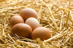 Organic Brown Eggs, Packaging Type: Egg Tray