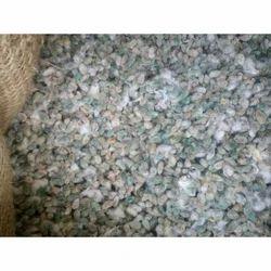 Chakra Cotton Seed