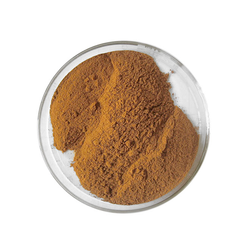 Chakramard Extract Powder