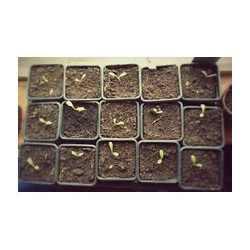 Garden Seedling Trays