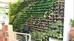 Vertical Indoor Wall Garden