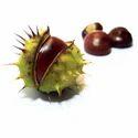 Horse Chestnut Extract