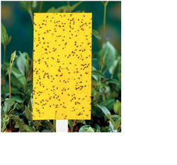 Agriculture Yellow Insect Trap