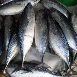 Fish Product