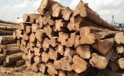 Benin Logs
