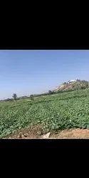 Land For Luxury Farm House Scheme Near Jaipur