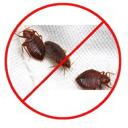 Captivating Bed Bug Control Service